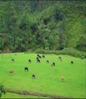 Mattupedi Dairy Farm