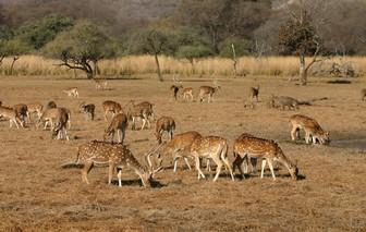 Gajner Wildlife Sanctuary,
