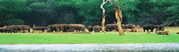 Annamalai National Park