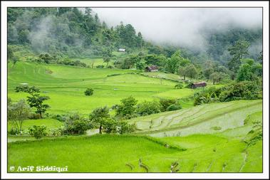Ukhrul the land of shiroy lily