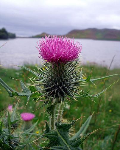 South part of Scotland